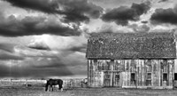 Horse and Barn Fine Art Print
