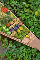 Detail of Boat in Water Lilies, Floating Market, Bangkok, Thailand Fine Art Print