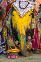 Elephant Festival, Jaipur, Rajasthan, India Fine Art Print