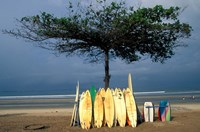 Surfboards Lean Against Lone Tree on Beach in Kuta, Bali, Indonesia Fine Art Print