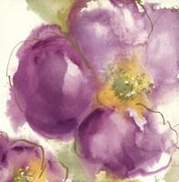 Radiant Poppy II Fine Art Print