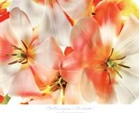 """24"""" x 20"""" Tulip Art"""