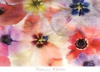 Nature's Palette Fine Art Print