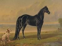 America's Renowned Stallions, c. 1876 I Fine Art Print
