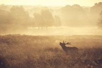 "24"" x 16"" the Mark Bridgercollection"