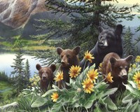 Basking in the Balsams Fine Art Print