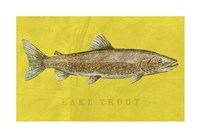 Lake Trout Fine Art Print