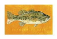 """Largemouth Bass by John W. Golden - 19"""" x 13"""""""
