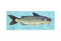 Channel Catfish Fine Art Print