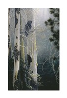 Silent Sentinel (Owl) Fine Art Print