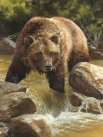 Grizzly at Roaring Creek Fine Art Print