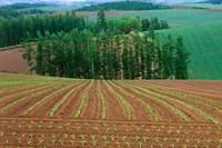Sugar Beet Field, Biei, Hokkaido, Japan by Rob Tilley - various sizes