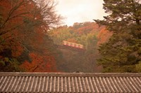Fall Color around Cable Train Railway, Kyoto, Japan Fine Art Print