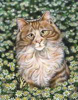 Daisy Fine Art Print