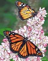 Monarch Butterfly Fine Art Print