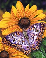 White Peacock Butterfly Fine Art Print