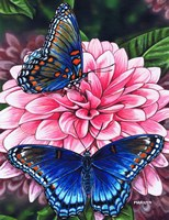 Red Spotted Purple Butterfly by Marilyn Barkhouse - various sizes