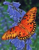 Brilliant Eye Jewel Butterfly-II