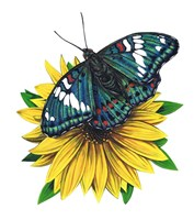 Gaudy Baron Butterfly-II by Marilyn Barkhouse - various sizes
