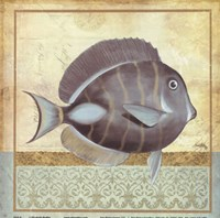 """Vintage Fish II by Elizabeth Medley - 8"""" x 8"""""""