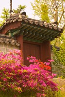 Azaleas, The Deoksugung Palace Complex, Seoul, South Korea Fine Art Print