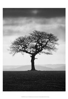Without Leaves Fine Art Print