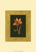 Tulip in Frame I Fine Art Print
