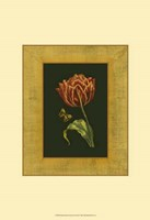 "Tulip in Frame III by Deborah Bookman - 13"" x 19"""