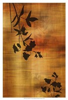 """Sepia Floral II by James Burghardt - 13"""" x 19"""""""