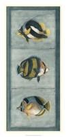 "Tropical Fish Trio II by Vision Studio - 16"" x 33"""