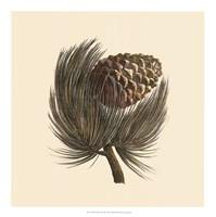 """Pignon Pine by Desahyes - 18"""" x 18"""" - $22.99"""