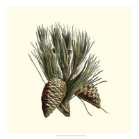 Bordeaux Pine Fine Art Print