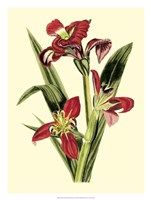 Royal Botanical Study II Fine Art Print
