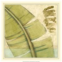 "Peacock Palm III by Jennifer Goldberger - 18"" x 18"""