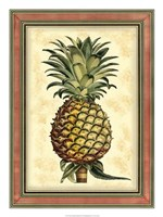 Pineapple Splendor II Framed Print