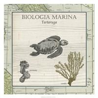 "Biologia Marina IV by Vision Studio - 26"" x 26"", FulcrumGallery.com brand"