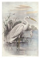 "Oversize White Heron by F.W. Frohawk - 24"" x 35"""