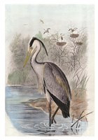 Oversize Common Heron Fine Art Print