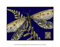 """Mini Shimmering Dragonfly III by Vision Studio - 9"""" x 7"""""""