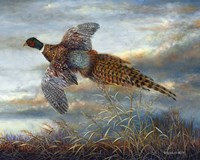 Taking Flight Fine Art Print