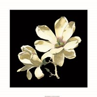 Midnight Magnolias I Fine Art Print