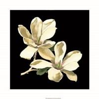 Midnight Magnolias II Framed Print