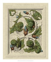 "Decorative Flourish II by Vision Studio - 18"" x 22"""