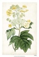 Floral Lace II Fine Art Print