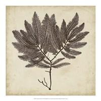"""Vintage Seaweed II by Georg C. Oeder - 18"""" x 18"""""""