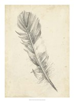 "Feather Sketch I by Ethan Harper - 16"" x 22"""