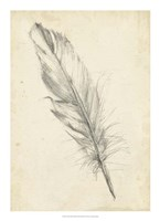 "Feather Sketch III by Ethan Harper - 16"" x 22"""