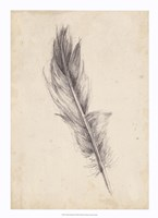 "Feather Sketch IV by Ethan Harper - 16"" x 22"""
