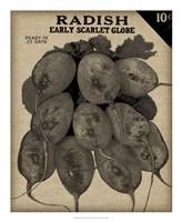 Vintage Seed Pack I Framed Print