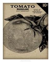 Vintage Seed Pack V Framed Print